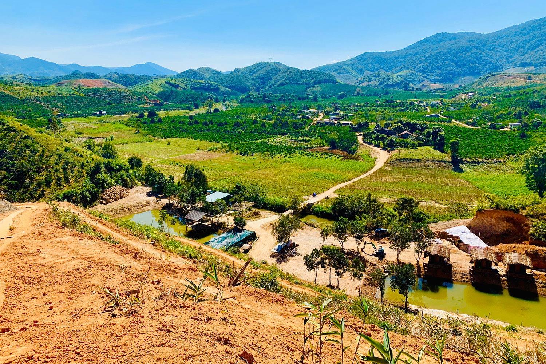 Trang trại sầu riêng Tân Lâm Nguyên