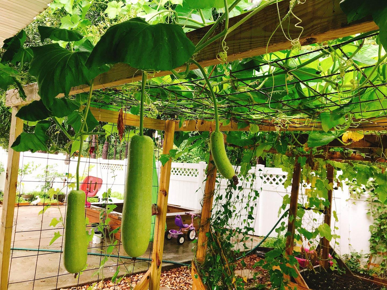 Một mảnh vườn nhỏ mang, một chút ánh nắng nhẹ. Sẽ là nơi lý tưởng cho gia đình vào cuối tuần