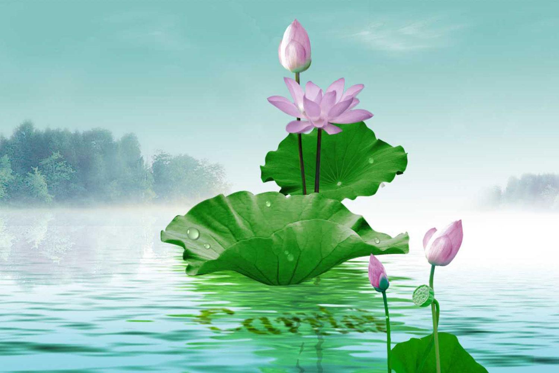 Tranh về hoa sen thích hợp đặt trong phòng ngủ