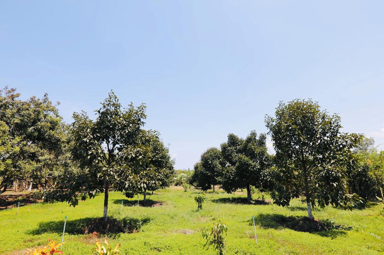 Vườn An's Farmhouse Bà Rịa