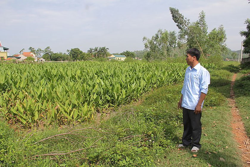 Nếu hết thời hạn sử dụng đất thì đất nông nghiệp sẽ không được chuyển nhượng cho người khác. Ảnh minh họa: Internet