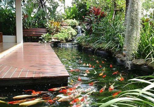 Hồ cá Koi trong khuôn viên ở biểu tượng cho may mắn, sự giàu có và hạnh phúc.
