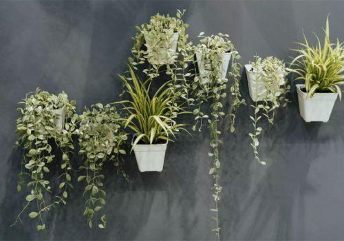 Vườn treo ấn tượng với loạt chậu trồng cây màu trắng nổi bật trên nền tường xám xanh.