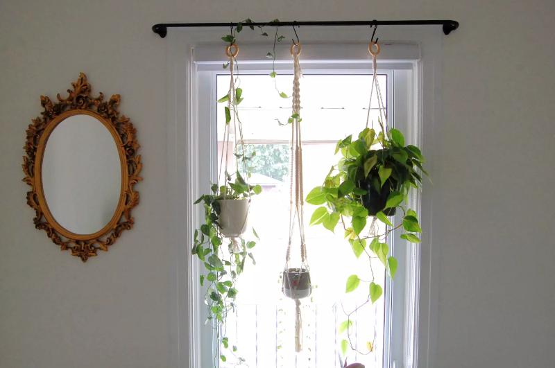 Thay vì rèm cửa thông thường, bạn có thể sử dụng cây xanh làm rèm ấn tượng.