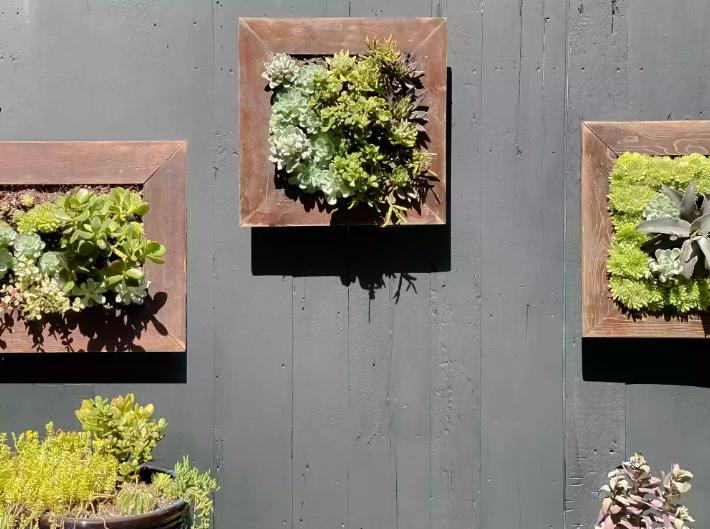 Vườn treo cây mọng nước thường được gắn trên bức tường nhận được nhiều ánh sáng  mặt trời trực tiếp nhất.