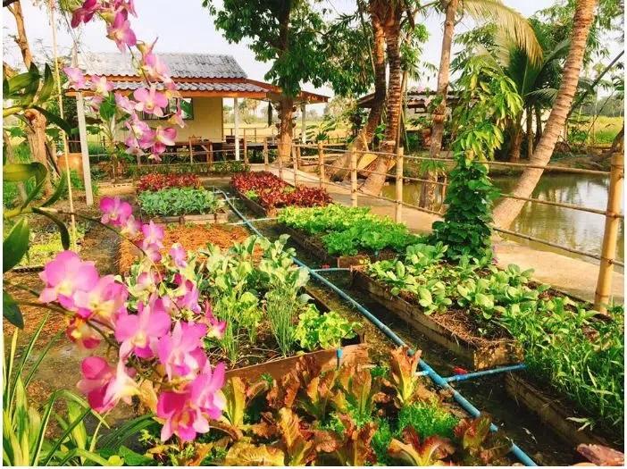 Vườn rau xanh sạch.