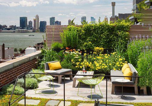 Khu vườn trên sân thượng ngập tràn nắng gió, sắc xanh và muôn hoa khoe sắc.