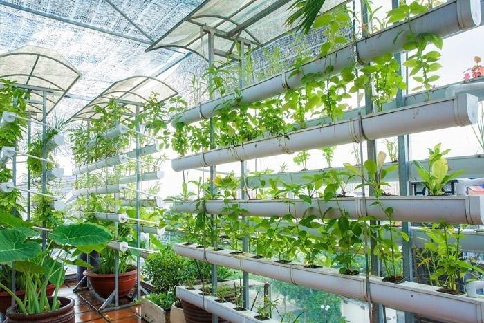Vườn rau trên sân thượng cung cấp nguồn rau củ sạch cho gia chủ, đồng thời góp phần thanh lọc không khí, làm mát không gian bên trong nhà hiệu quả.