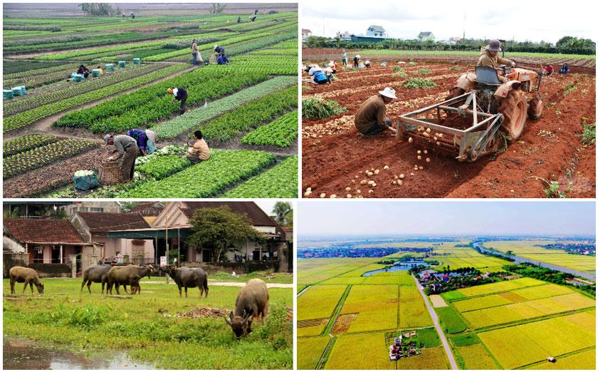 Xu hướng phát triển Farmstay nhìn từ tiềm năng bất động sản Nông Nghiệp 02