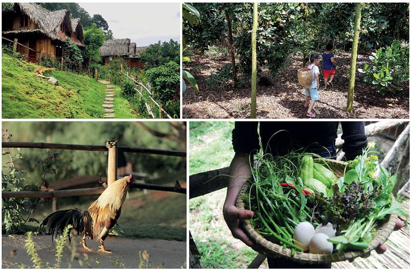 Xu hướng phát triển Farmstay nhìn từ tiềm năng bất động sản Nông Nghiệp 04