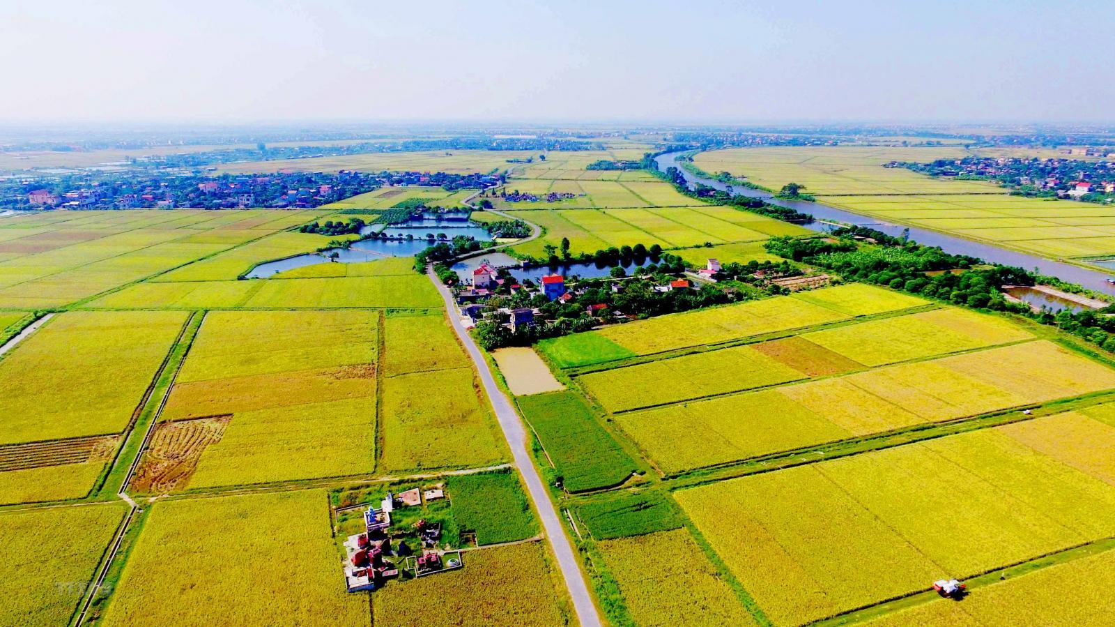Đất nông nghiệp được Nhà nước chia làm nhiều nhóm nhỏ để dễ quản lý